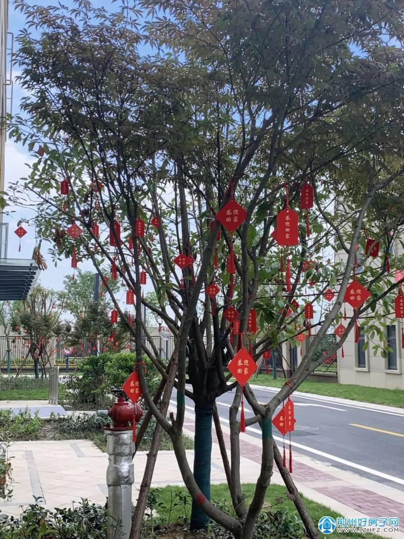 中国结树挂