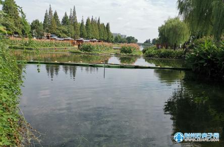 北护城河生态修复试验段工程