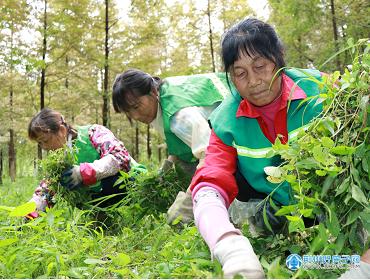 绿化景观提质集中大整治