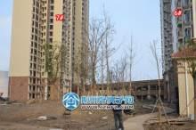 6#-8#楼之间的区域正在进行绿化施工