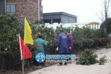 车库入口处,工人正在栽种绿植